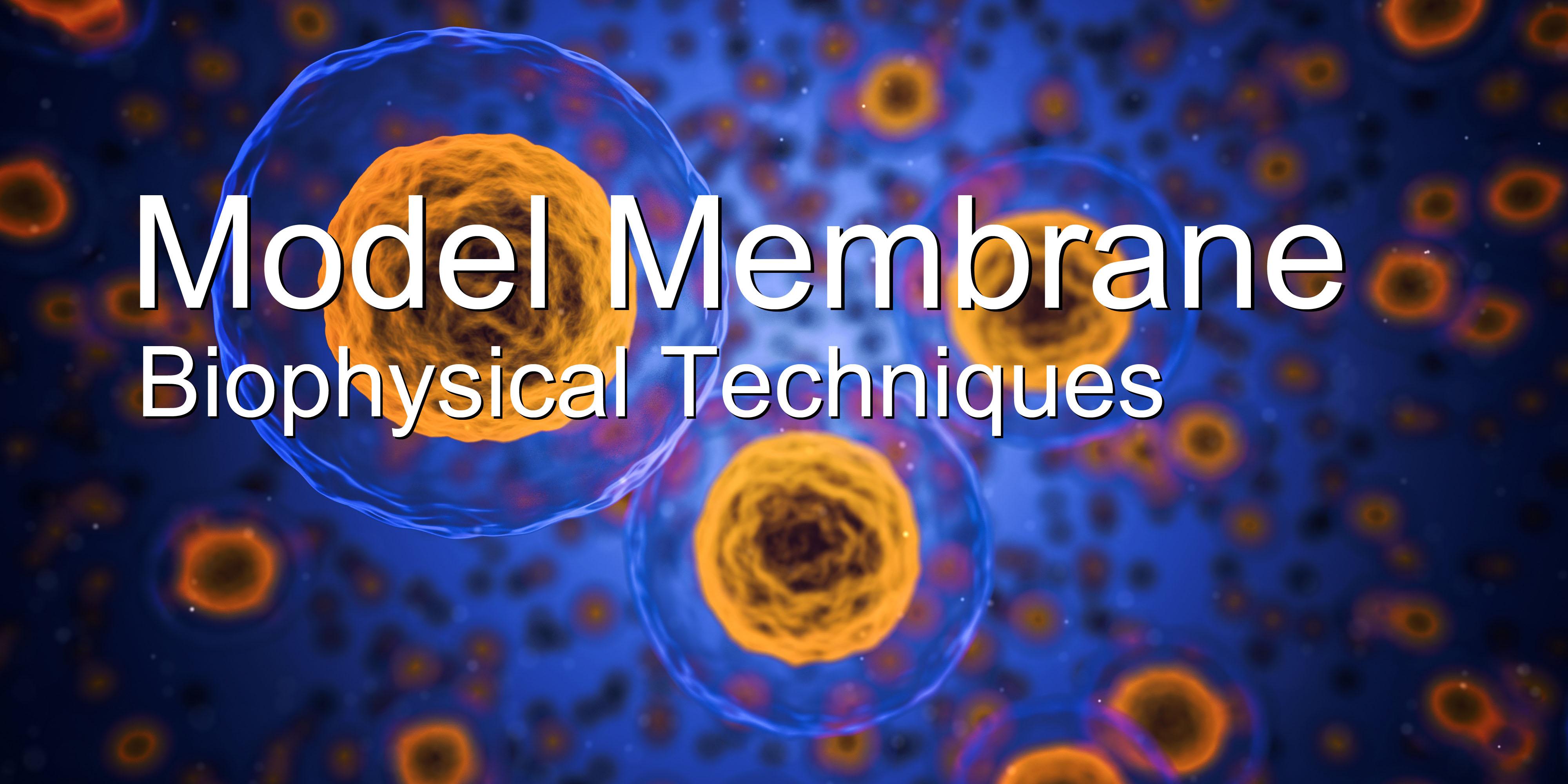 Model Membranes