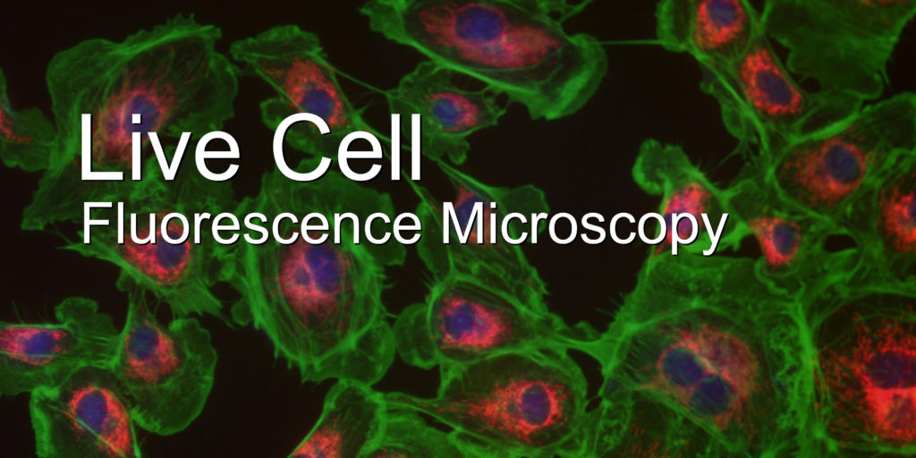 fluorescent cells-text
